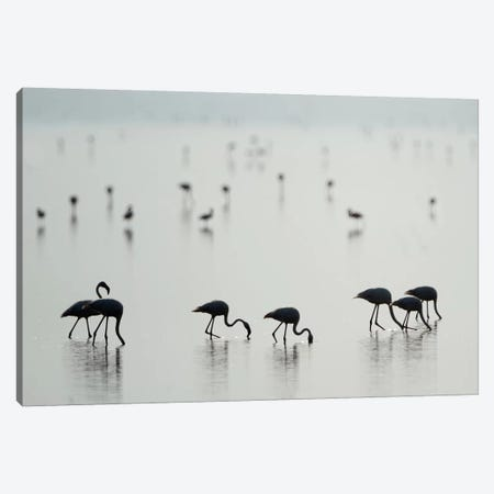 Greater Flamingos II, Ngorongoro Conservation Area, Crater Highlands, Arusha Region, Tanzania Canvas Print #PIM14041} by Panoramic Images Art Print