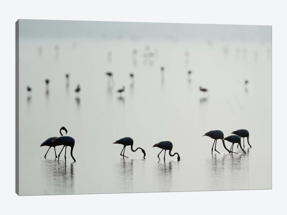 Greater Flamingos II, Ngorongoro Conservation Area, Crater Highlands, Arusha Region, Tanzania by Panoramic Images 1-piece Canvas Art Print