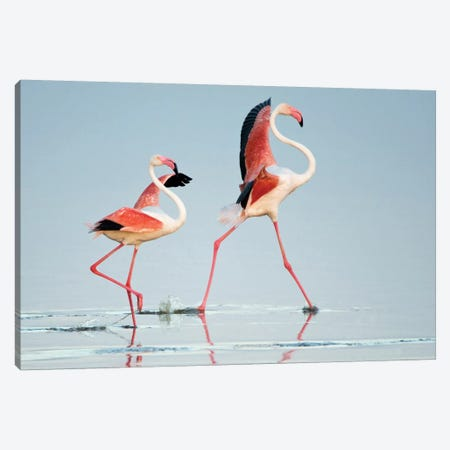 Greater Flamingos III, Ngorongoro Conservation Area, Crater Highlands, Arusha Region, Tanzania Canvas Print #PIM14042} by Panoramic Images Art Print