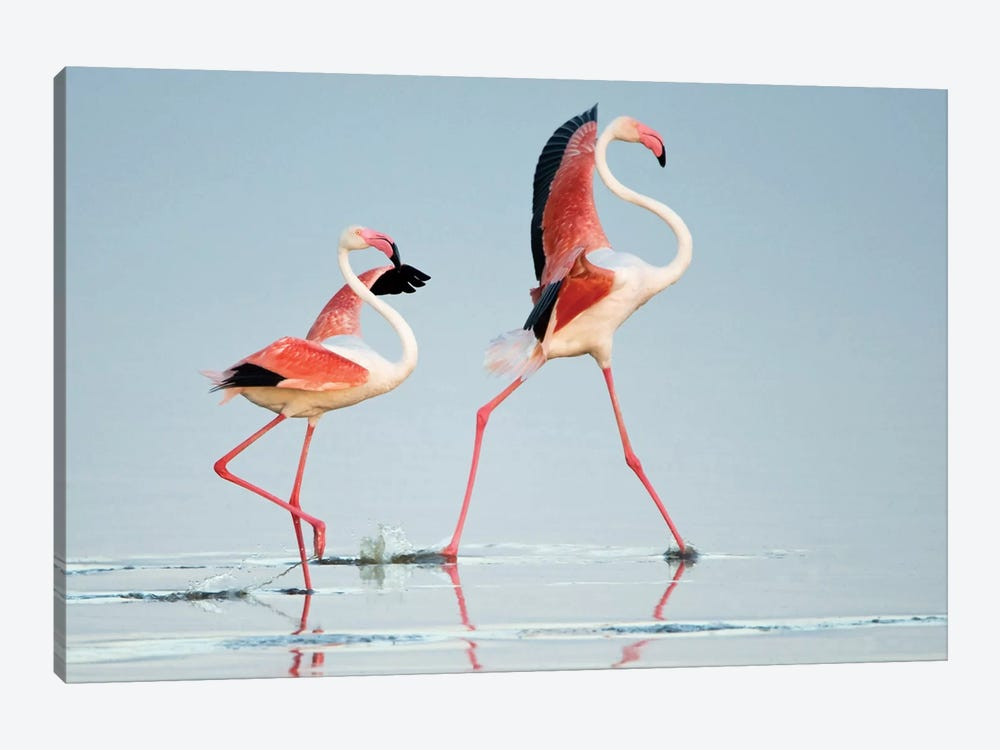 Greater Flamingos III, Ngorongoro Conservation Area, Crater Highlands, Arusha Region, Tanzania by Panoramic Images 1-piece Canvas Wall Art