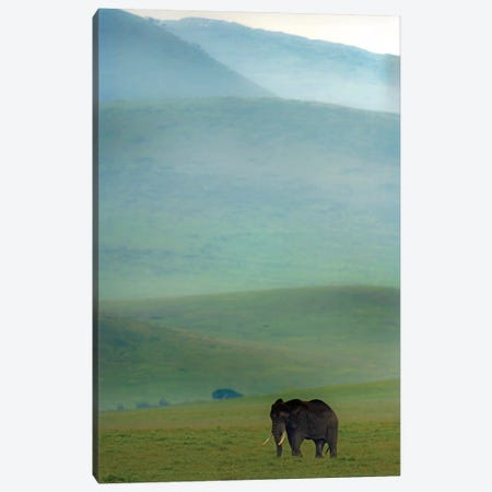 African Elephant, Ngorongoro Conservation Area, Crater Highlands, Arusha Region, Tanzania Canvas Print #PIM14053} by Panoramic Images Canvas Artwork