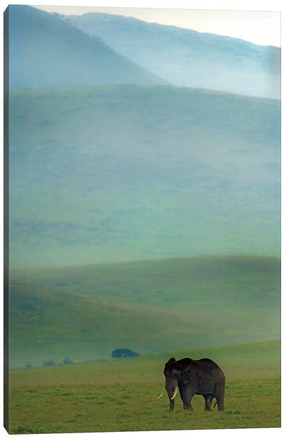 African Elephant, Ngorongoro Conservation Area, Crater Highlands, Arusha Region, Tanzania Canvas Art Print