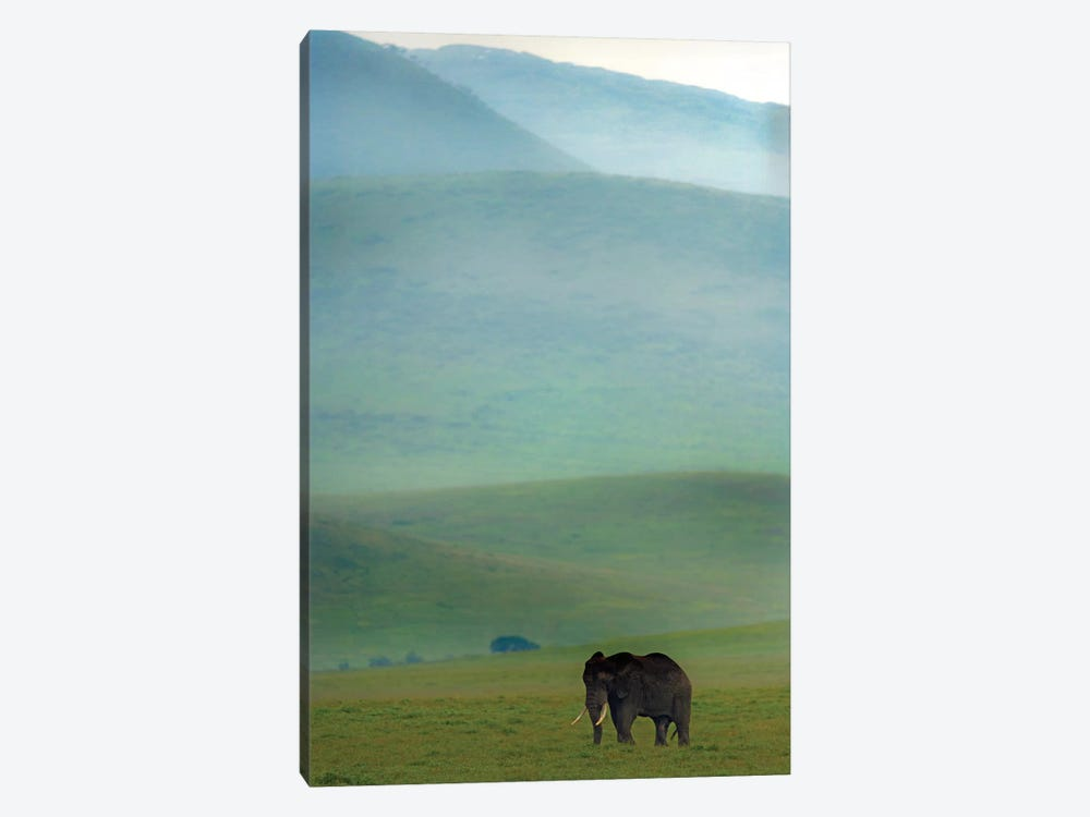 African Elephant, Ngorongoro Conservation Area, Crater Highlands, Arusha Region, Tanzania by Panoramic Images 1-piece Canvas Art