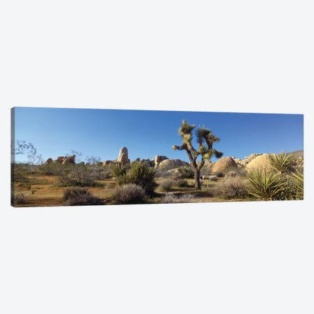 Spring Landscape I, Joshua Tree National Park, California, USA Canvas Print #PIM14078} by Panoramic Images Canvas Wall Art