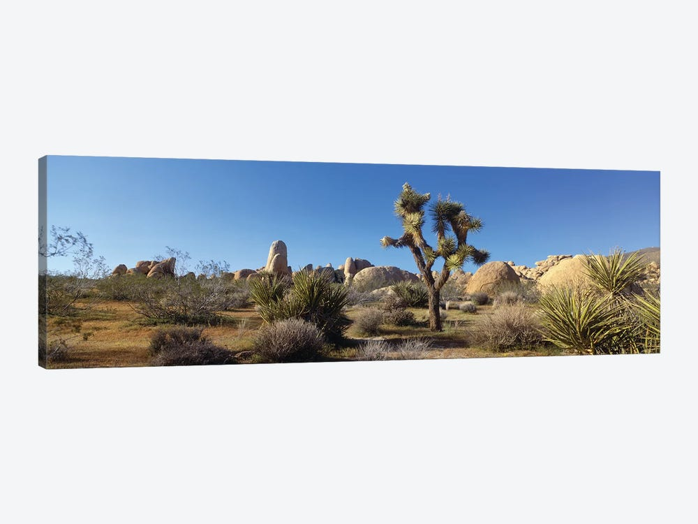Spring Landscape I, Joshua Tree National Park, California, USA by Panoramic Images 1-piece Canvas Art Print