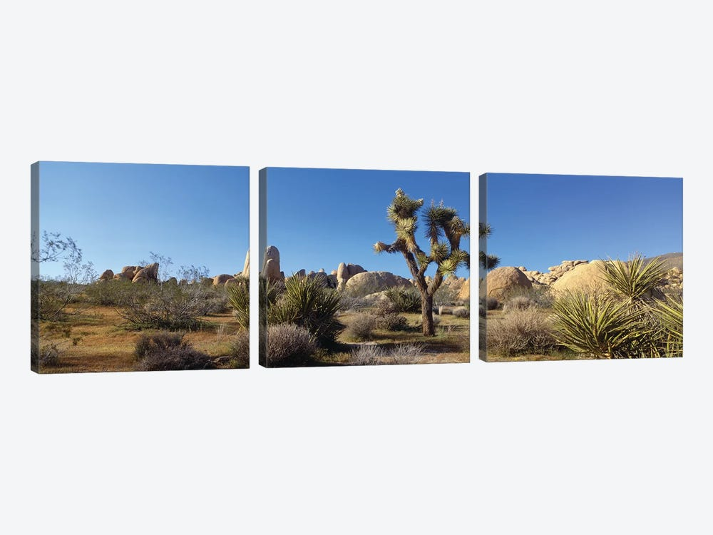 Spring Landscape I, Joshua Tree National Park, California, USA by Panoramic Images 3-piece Canvas Print