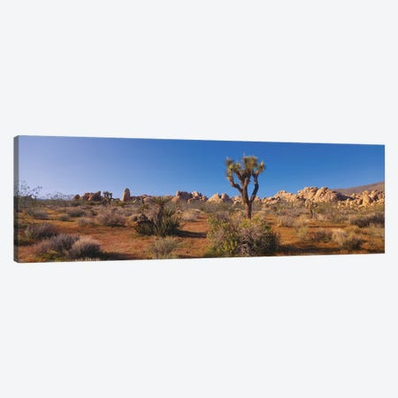 Spring Landscape II, Joshua Tree National Park, California, USA Canvas Print #PIM14087} by Panoramic Images Canvas Artwork