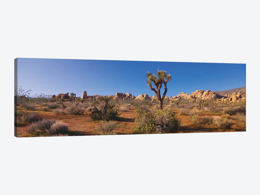 Spring Landscape II, Joshua Tree National Park, California, USA 1-piece Canvas Art Print