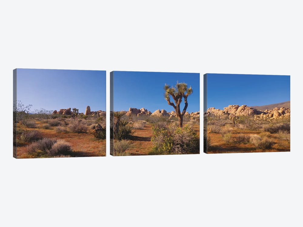 Spring Landscape II, Joshua Tree National Park, California, USA by Panoramic Images 3-piece Canvas Art Print