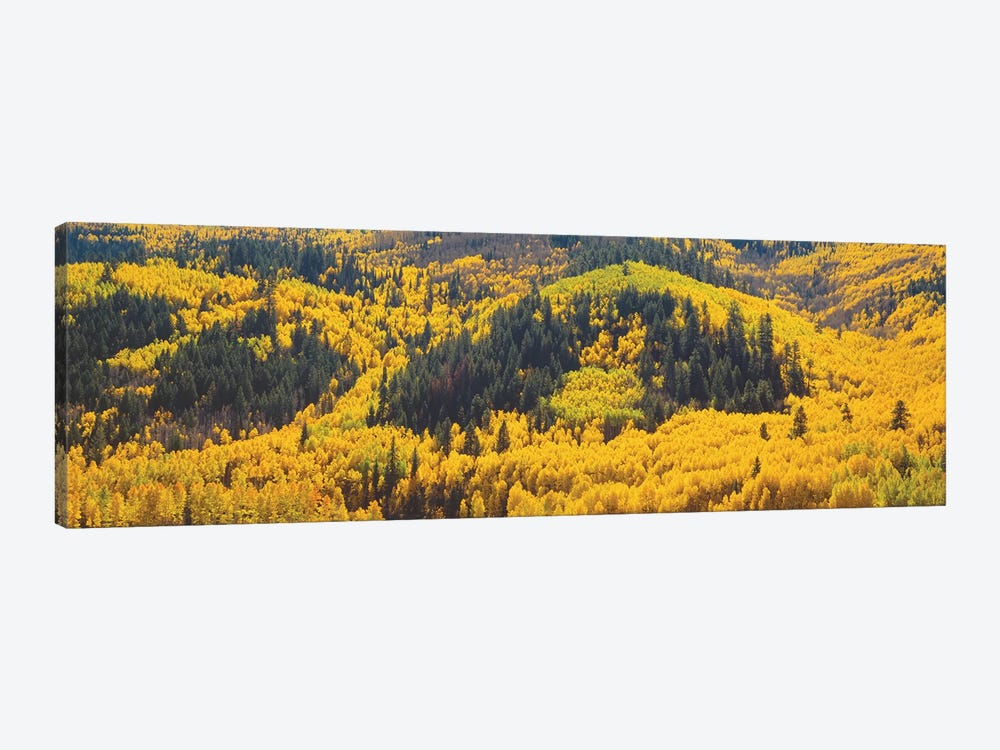 Autumn Landscape, Dolores County, Colorado, USA by Panoramic Images 1-piece Canvas Artwork