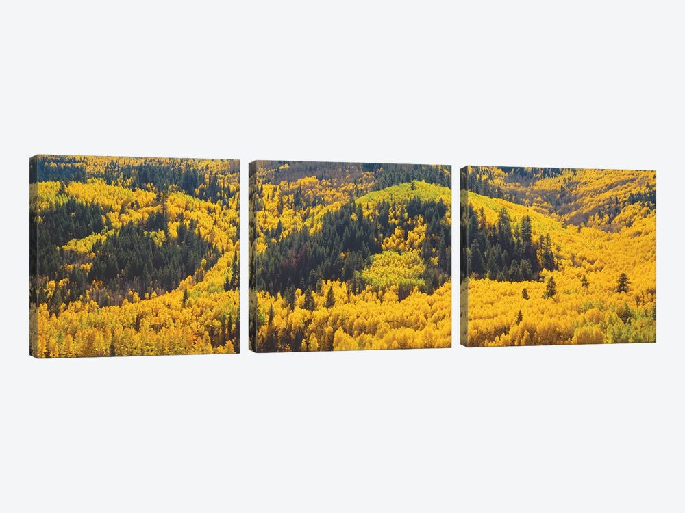 Autumn Landscape, Dolores County, Colorado, USA by Panoramic Images 3-piece Canvas Artwork