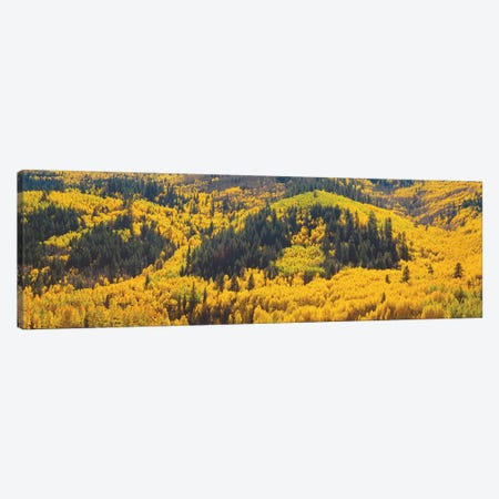Autumn Landscape, Dolores County, Colorado, USA Canvas Print #PIM14093} by Panoramic Images Canvas Art
