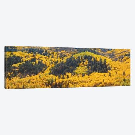 Autumn Landscape, Dolores County, Colorado, USA Canvas Print #PIM14093} by Panoramic Images Canvas Art