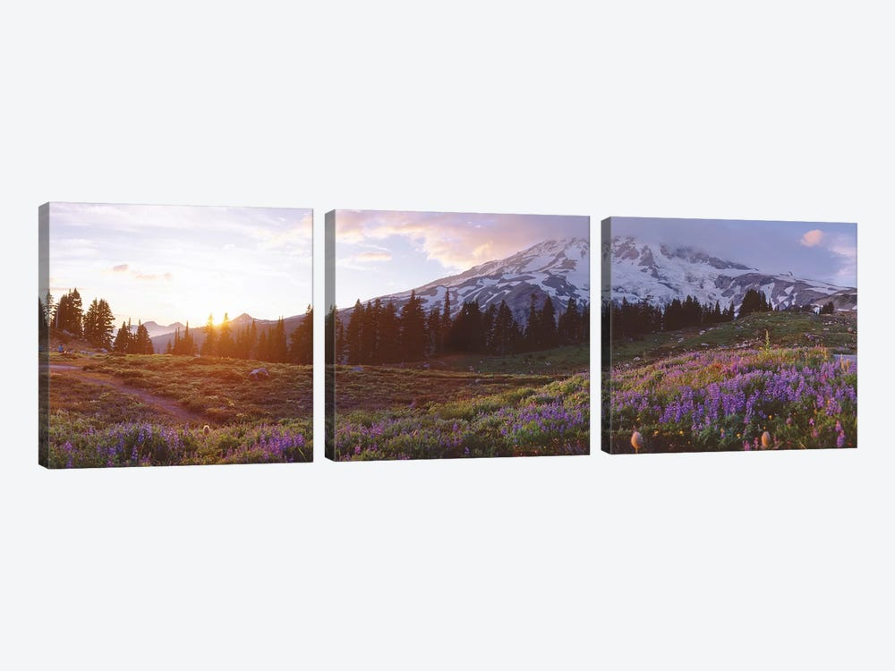 Spring Landscape, Mount Rainier Wilderness, Pierce County, Washington, USA by Panoramic Images 3-piece Canvas Print