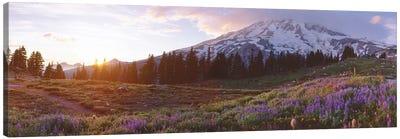 Spring Landscape, Mount Rainier Wilderness, Pierce County, Washington, USA Canvas Art Print