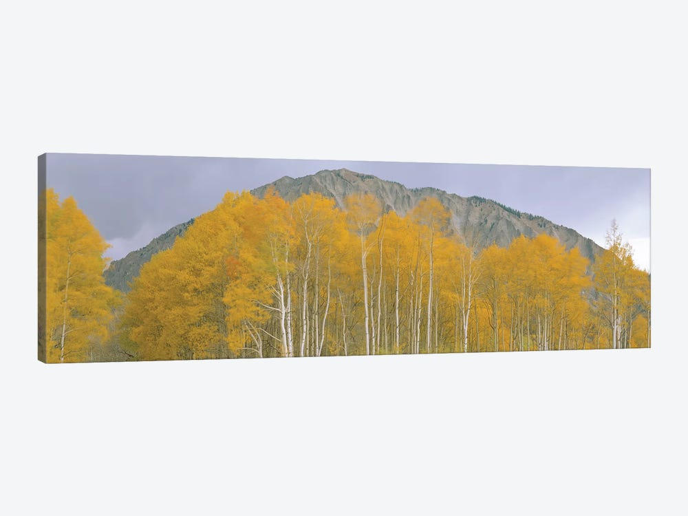 Autumn Landscape, Kebler Pass, Gunnison National Forest, Gunnison County, Colorado, USA 1-piece Canvas Artwork