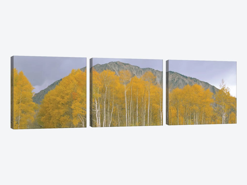 Autumn Landscape, Kebler Pass, Gunnison National Forest, Gunnison County, Colorado, USA 3-piece Canvas Art