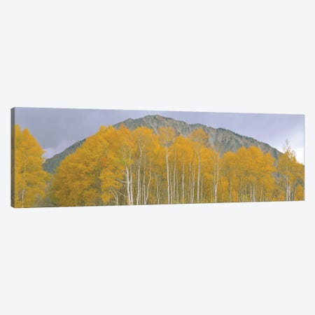 Autumn Landscape, Kebler Pass, Gunnison National Forest, Gunnison County, Colorado, USA Canvas Print #PIM14095} by Panoramic Images Canvas Print