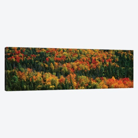 Autumn Landscape II, Porcupine Mountains Wilderness State Park, Upper Peninsula, Michigan, USA Canvas Print #PIM14105} by Panoramic Images Canvas Print