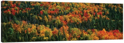 Autumn Landscape II, Porcupine Mountains Wilderness State Park, Upper Peninsula, Michigan, USA Canvas Print #PIM14105
