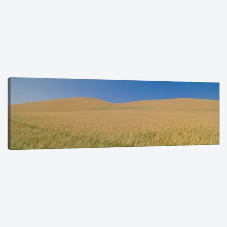 Wheat Fields, Washington, USA Canvas Print #PIM14107} by Panoramic Images Art Print