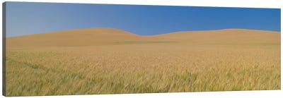 Wheat Fields, Washington, USA Canvas Print #PIM14107