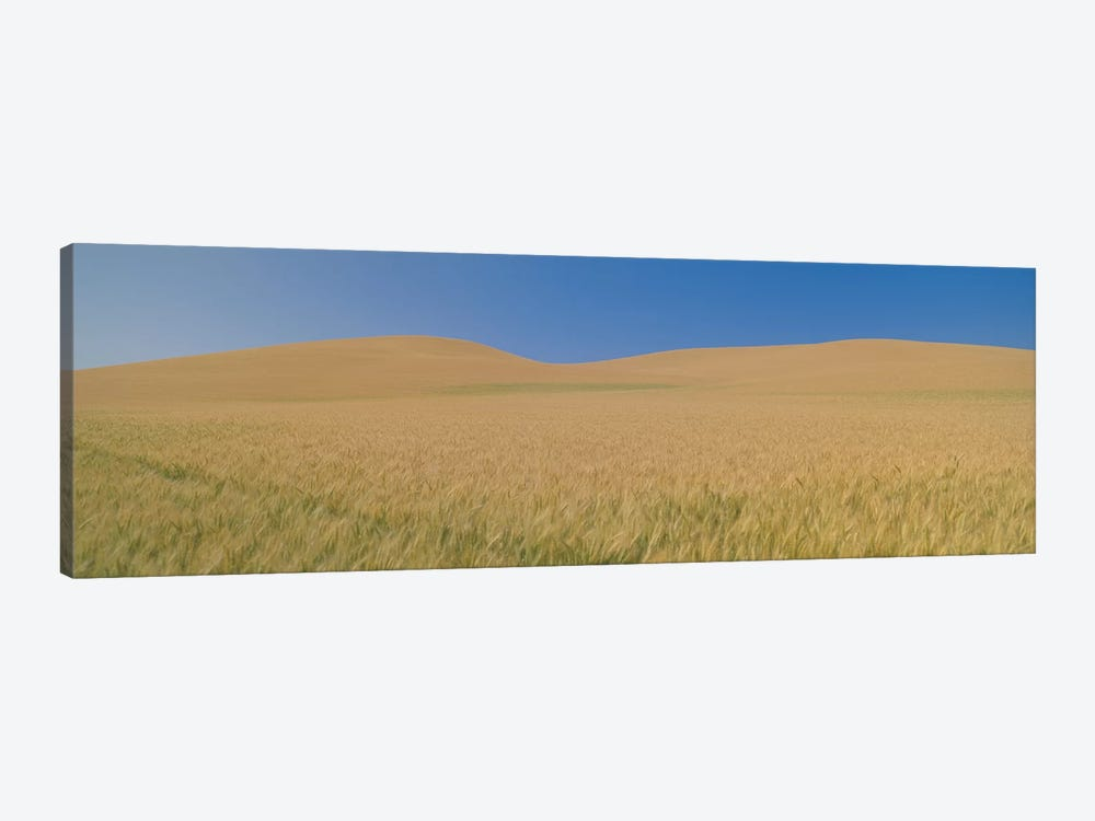 Wheat Fields, Washington, USA by Panoramic Images 1-piece Canvas Artwork