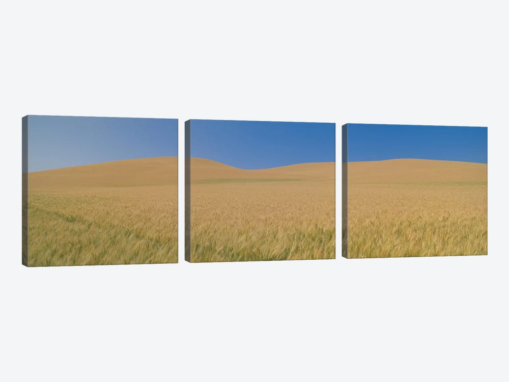 Wheat Fields, Washington, USA by Panoramic Images 3-piece Canvas Artwork