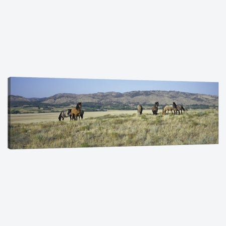 Wild Mustang Herd, Black Hills Wild Horse Sanctuary, Hot Springs, Fall River County, South Dakota, USA Canvas Print #PIM14141} by Panoramic Images Canvas Wall Art