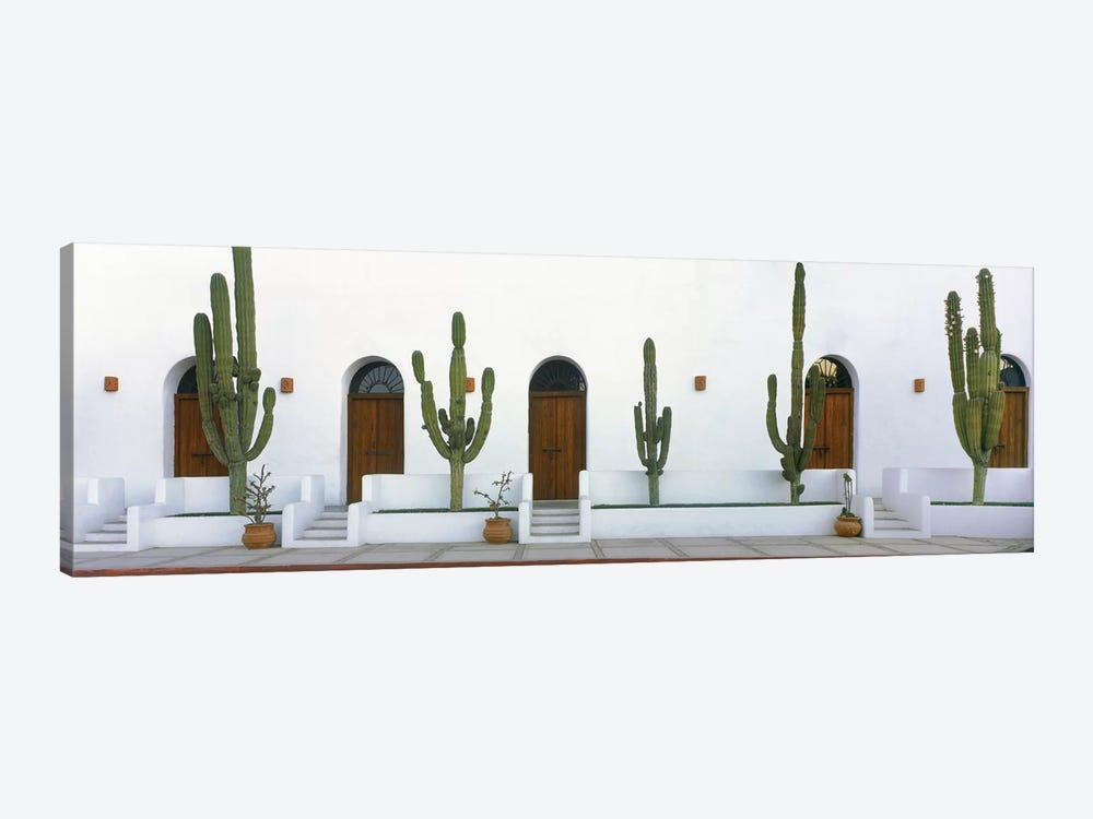 Elephant Cacti (Giant Cardon), Todos Santos, Baja California Sur, Mexico by Panoramic Images 1-piece Canvas Art Print