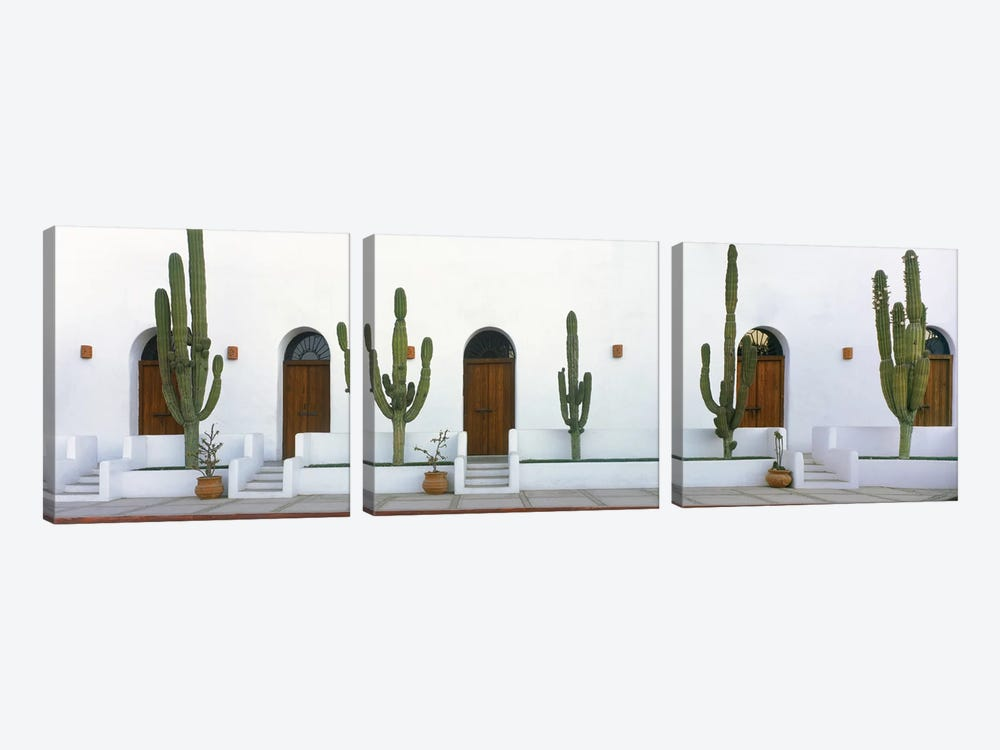 Elephant Cacti (Giant Cardon), Todos Santos, Baja California Sur, Mexico by Panoramic Images 3-piece Canvas Print