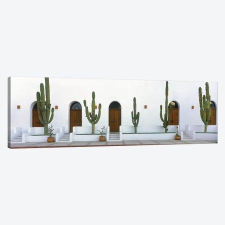 Elephant Cacti (Giant Cardon), Todos Santos, Baja California Sur, Mexico 3-Piece Canvas #PIM14146} by Panoramic Images Canvas Print