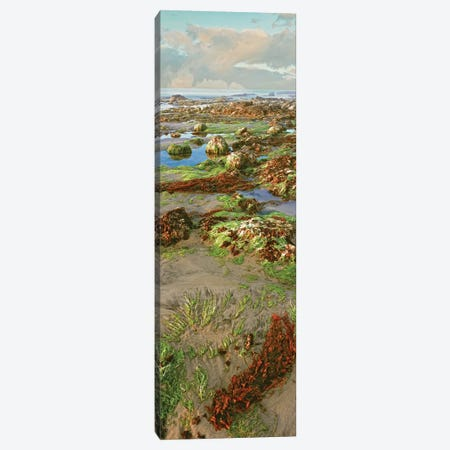 Coastal Landscape I, Las Rocas, Baja California, Mexico Canvas Print #PIM14151} by Panoramic Images Canvas Print