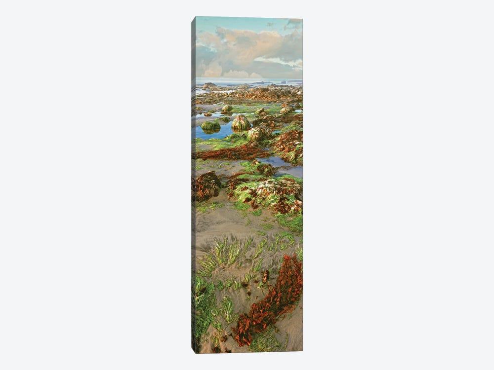Coastal Landscape I, Las Rocas, Baja California, Mexico by Panoramic Images 1-piece Canvas Print