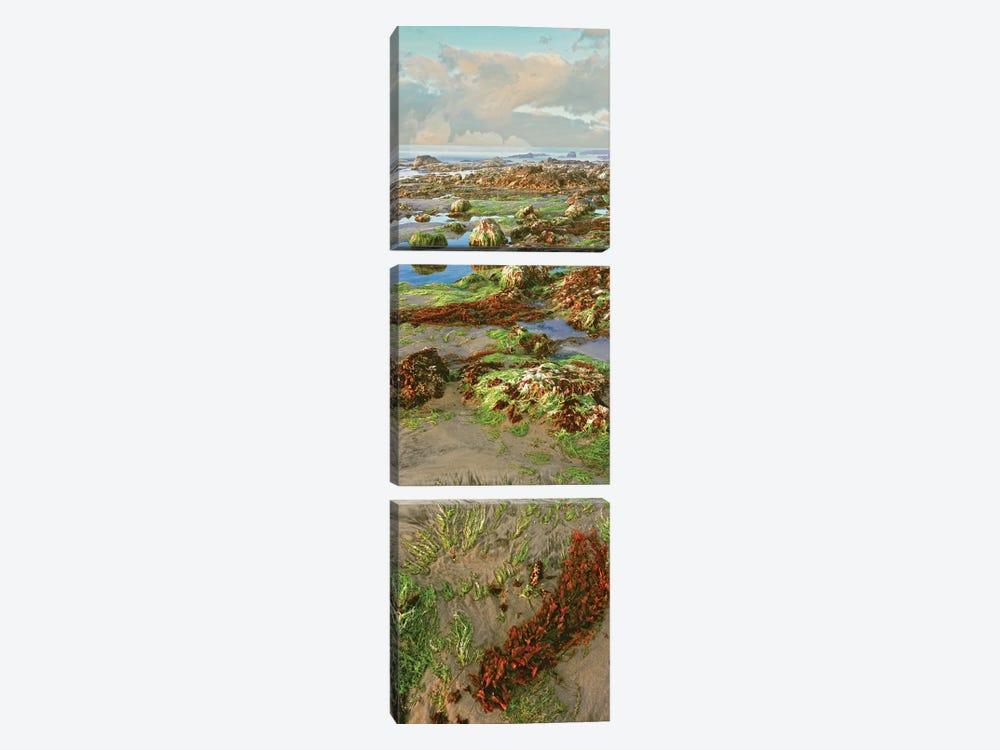 Coastal Landscape I, Las Rocas, Baja California, Mexico by Panoramic Images 3-piece Canvas Print
