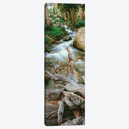 Meltwater, Glacier Gulch, Grand Teton National Park, Wyoming, USA Canvas Print #PIM14169} by Panoramic Images Canvas Art