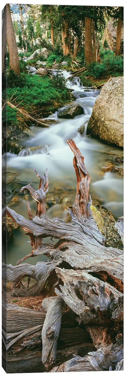 Meltwater, Glacier Gulch, Grand Teton National Park, Wyoming, USA Canvas Art Print