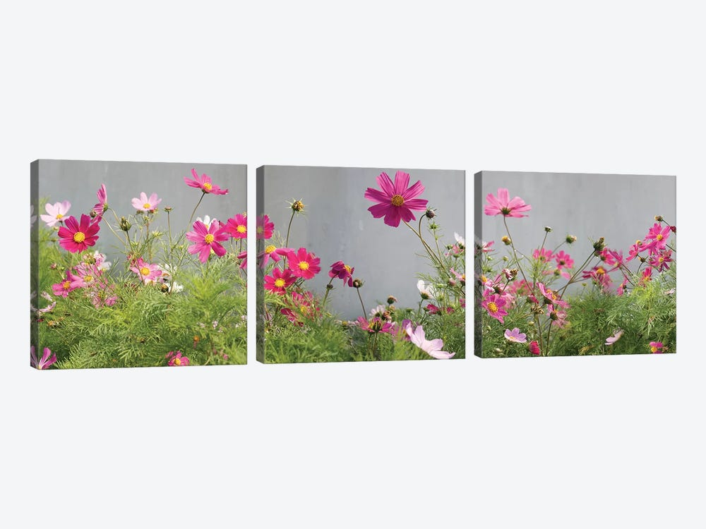 Field of Cosmos by Panoramic Images 3-piece Canvas Wall Art