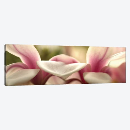 Tulips in Zoom Canvas Print #PIM14175} by Panoramic Images Canvas Art