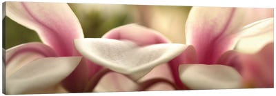 Tulips in Zoom Canvas Print #PIM14175