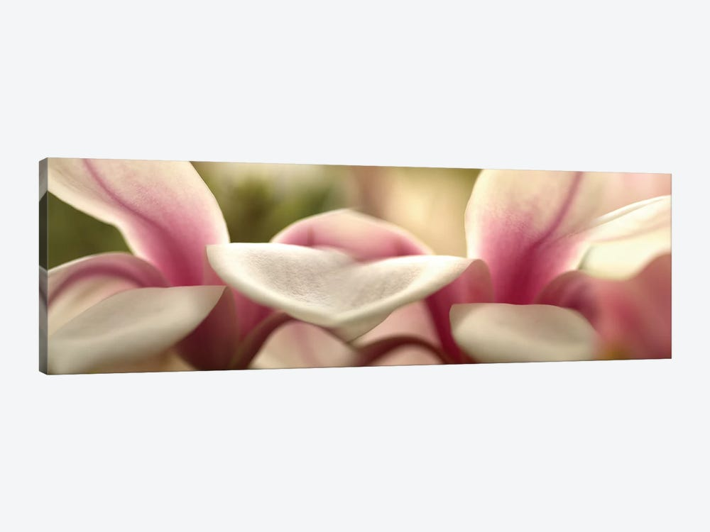 Tulips in Zoom by Panoramic Images 1-piece Canvas Print