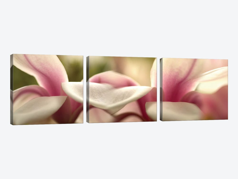 Tulips in Zoom by Panoramic Images 3-piece Art Print