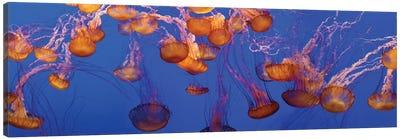 A Bloom of Jellyfish Canvas Art Print