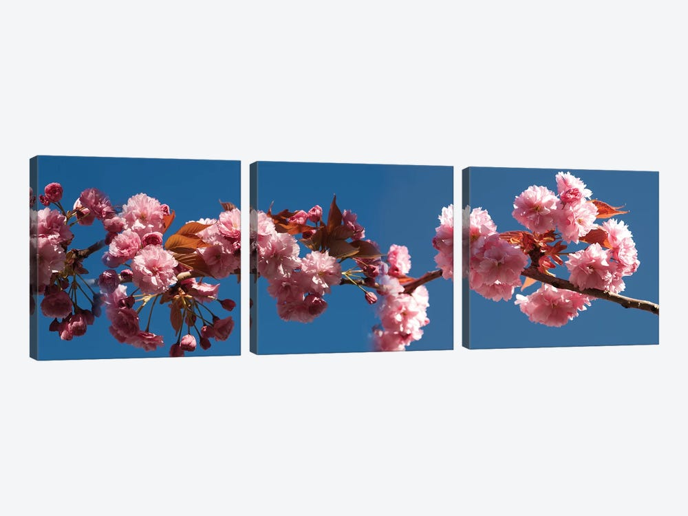 A Branch of Cherry Blossoms by Panoramic Images 3-piece Canvas Art