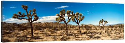 Desert Landscape, Joshua Tree National Park, California, USA Canvas Art Print