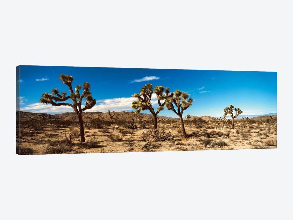 Desert Landscape, Joshua Tree National Park, California, USA by Panoramic Images 1-piece Art Print