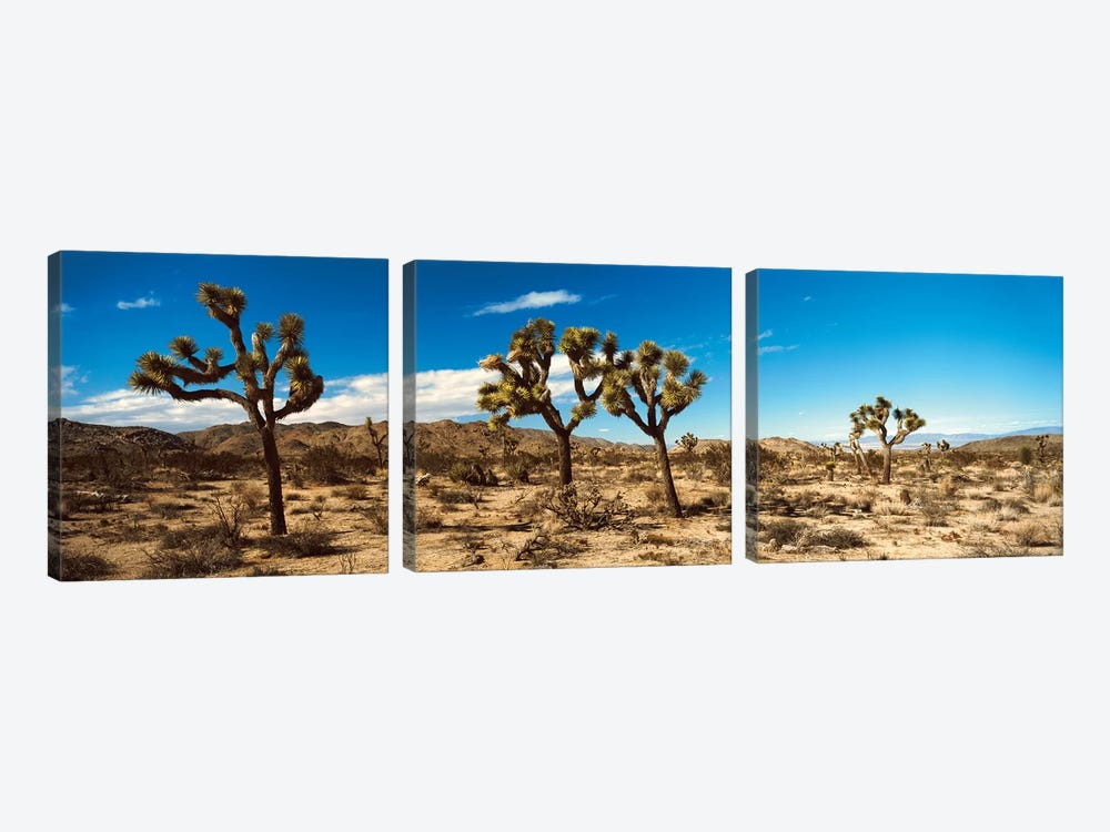 Desert Landscape, Joshua Tree National Park, California, USA by Panoramic Images 3-piece Canvas Print
