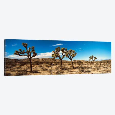 Desert Landscape, Joshua Tree National Park, California, USA Canvas Print #PIM14186} by Panoramic Images Canvas Art Print