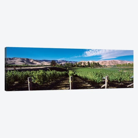 Vineyard, Marlborough Region, South Island, New Zealand Canvas Print #PIM14187} by Panoramic Images Canvas Print