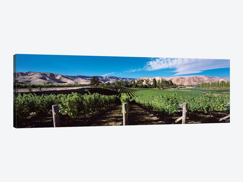Vineyard, Marlborough Region, South Island, New Zealand by Panoramic Images 1-piece Canvas Art